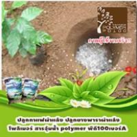 โพลิเมอร์-สารอุ้มน้ำพีดี100-ใช้โพลิเมอร์ในการปลูกกาแฟและยางพารา
