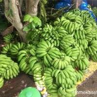 โฮมเกษตร-จะไขข้อสงสัยว่ากล้วยในประเทศไทย-มีกี่สายพันธ์ุ